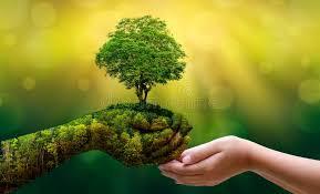 Красный клевер лечебные свойства от холестерина — здоровье и долголетие