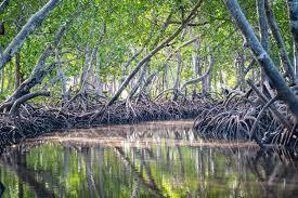 Что делать при солнечном ожоге чем лечить