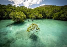 Первая помощь эфирными маслами как применять рецепты