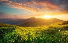 Таежный мед польза и вред
