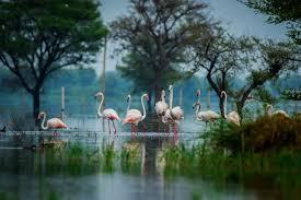 Сибирская чистка кедровой живицей инструкция отзывы