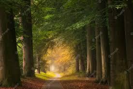 Ароматерапия с эфирными маслами в домашних условиях