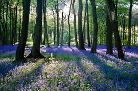Капсаицин польза и вред. что это такое применение