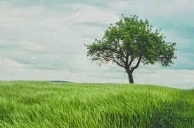 Три техники медитации для глубого расслабления и снятия стресса