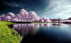 Почему желтые ногти на руках причины что делать лечение