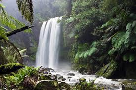 Травы при сахарном диабете 2 типа — здоровье и долголетие