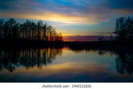 Применение эфирного масла эвкалипта — здоровье и долголетие