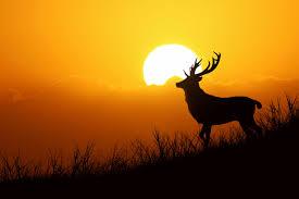 Какие масла можно применять для лечения подагры