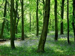 Черная редька с медом польза противопоказания рецепты
