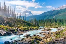 Польза, лечебные свойства и противопоказания к употреблению амурского бархата