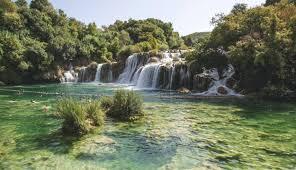 Использование коры дуба и его лечебных свойств